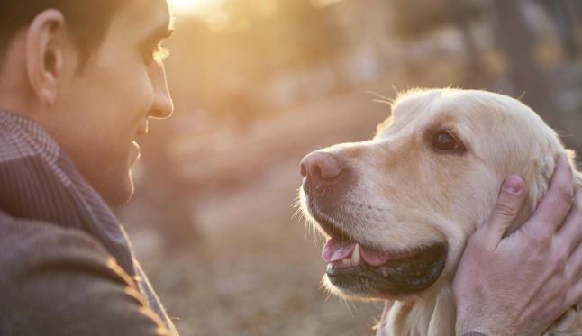Enjoy and balance your FIFO life with your pet through PetCloud