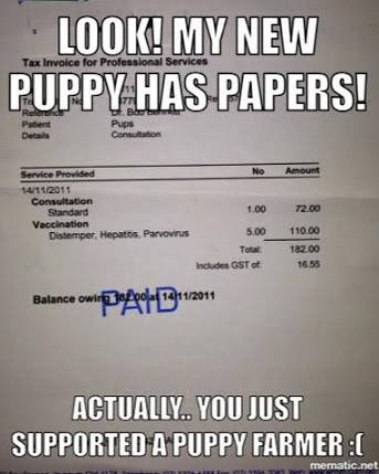 A receipt that a Breeder has paid for a Vaccination from a Vet
