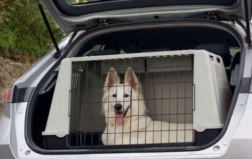 Larger Dogs in the car might be better in a large crate