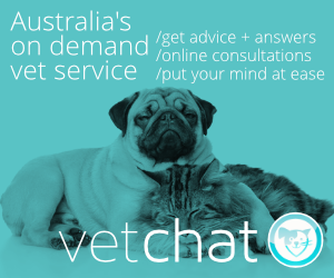 Vet Chat website