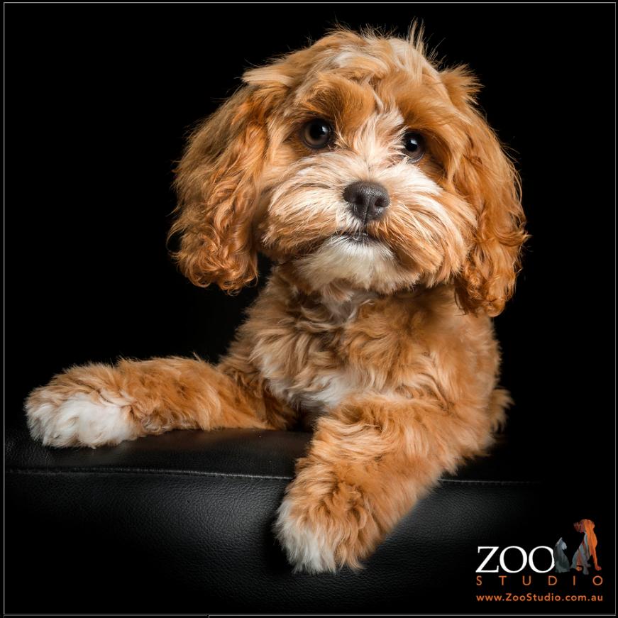 PetCloud Milly Zoo Studio