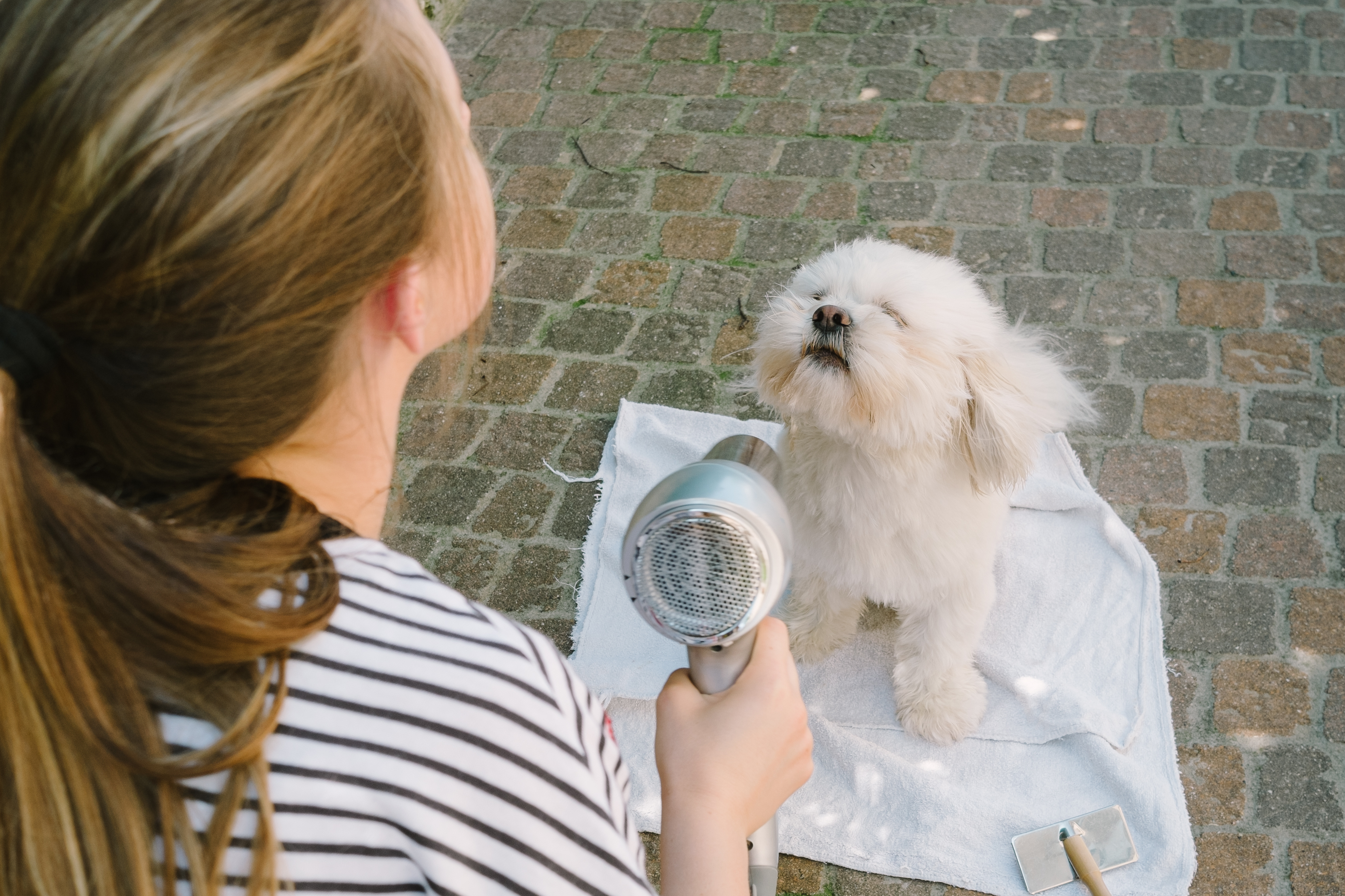 Jobs range from Washing Dogs, Dog Walking, and General Pet Care while Pets stay at your home