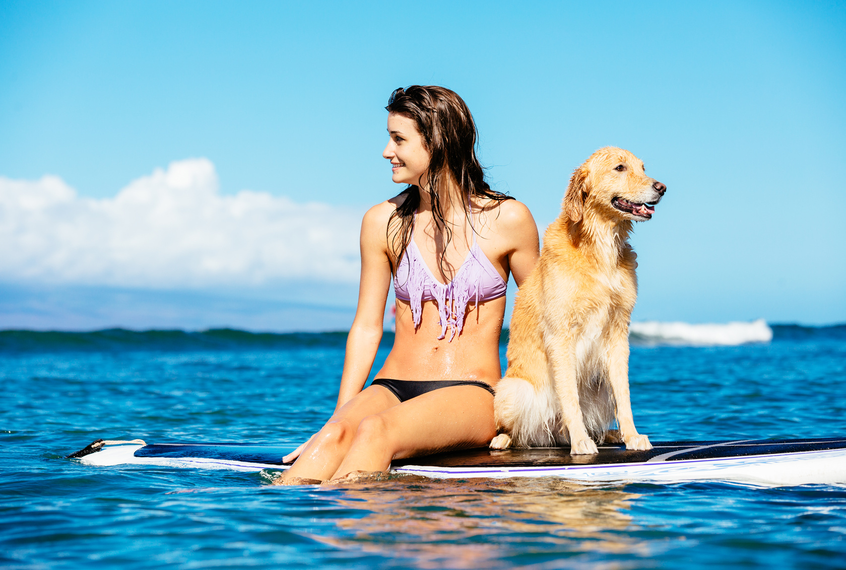Top 5 Fun Ways - pet exercise blog article image