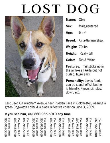 Lost Dog Information