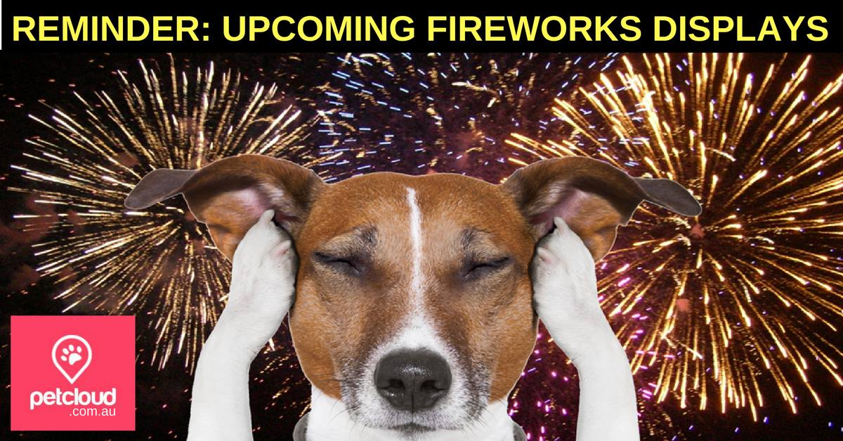 How should I care for my pets during fireworks displays? PetCloud, Pet Sitting, Fireworks, Pet Safety, New Year Eve, Pets, Dogs blog article image