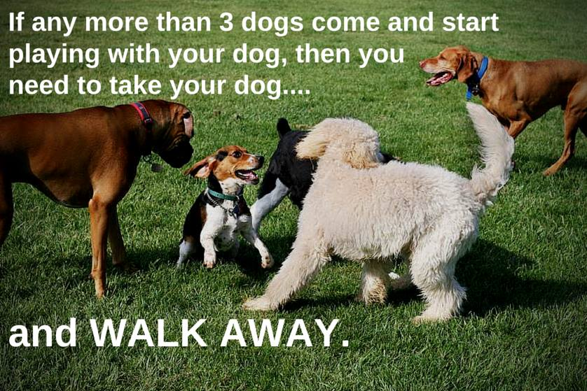 Do's & Don'ts of Dog Park Safety and Etiquette