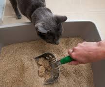 PetCloud Pet Sitter disposing of cat poop in an apartment