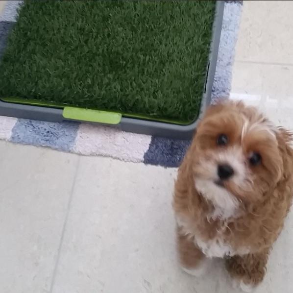 PetCloud Pet Sitter disposing of dog poop in an apartment