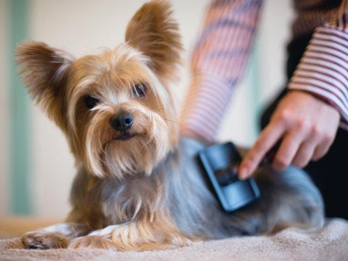 PetCloud Pet Sitter brushing the dog