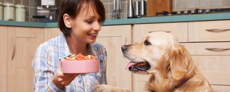 PetCloud Pet Sitter feeding the dog