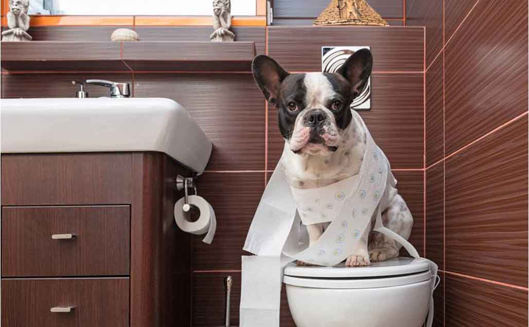 Toilet training options for your dog when living in an Apartment blog article image