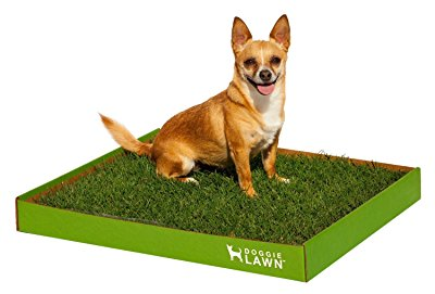 Choose fresh grass over synthetic grass