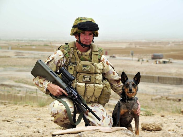 ANZAC, Australia Defence Force, Australian Army, Dogs in War, Dogs in the Army.