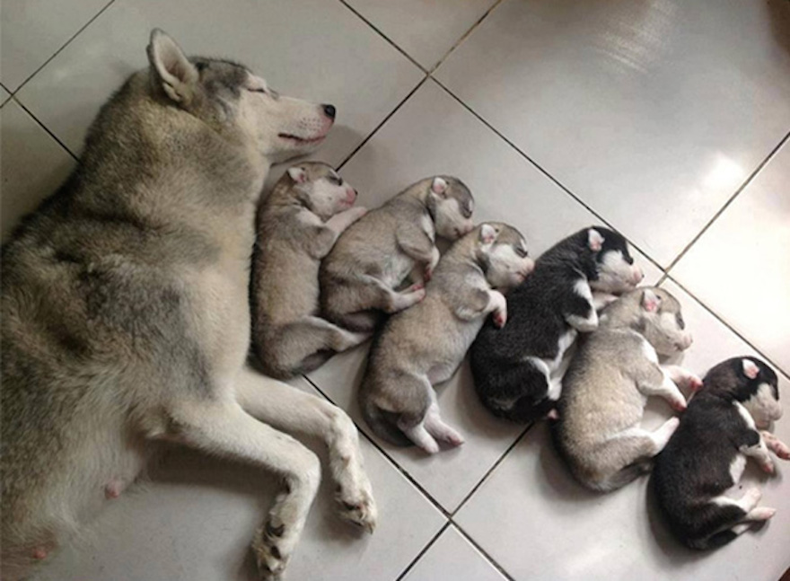 Proud Mom Has Her Pups All Lined Up In A Row