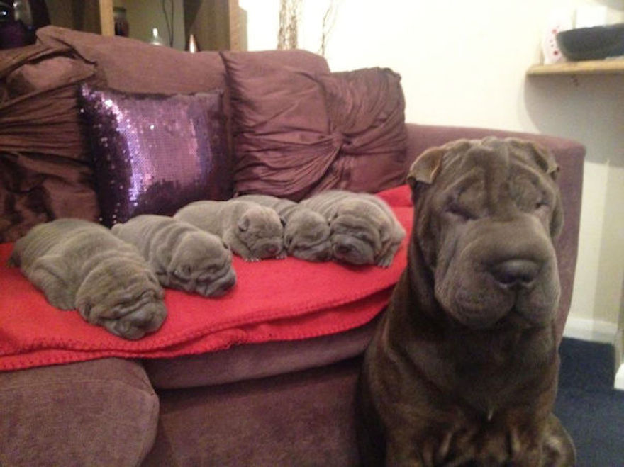 One Big Wrinkle made all of these baby wrinkles