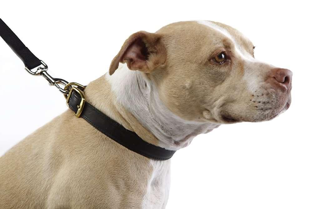 collar, petcloud, dog walking, dog minding, tips for owners, dog lover, dog bites