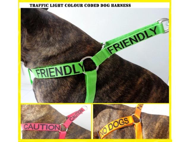 colour coded, pets, dogs, puppies, pet walking, safe pet leads, petcloud