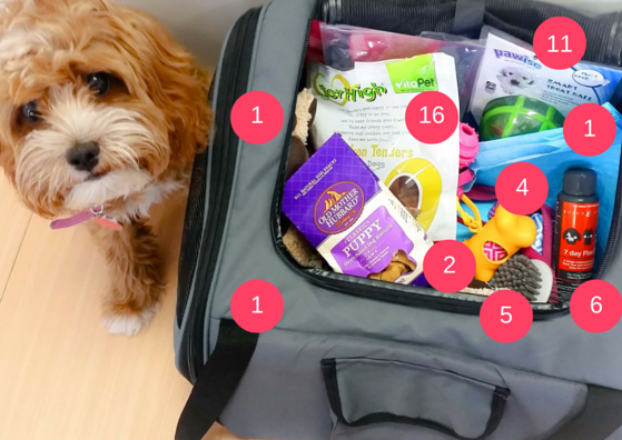 Items to pack for your pet