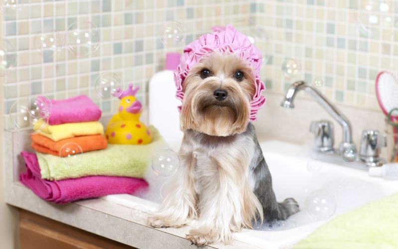 Dog Day Spa Sydney