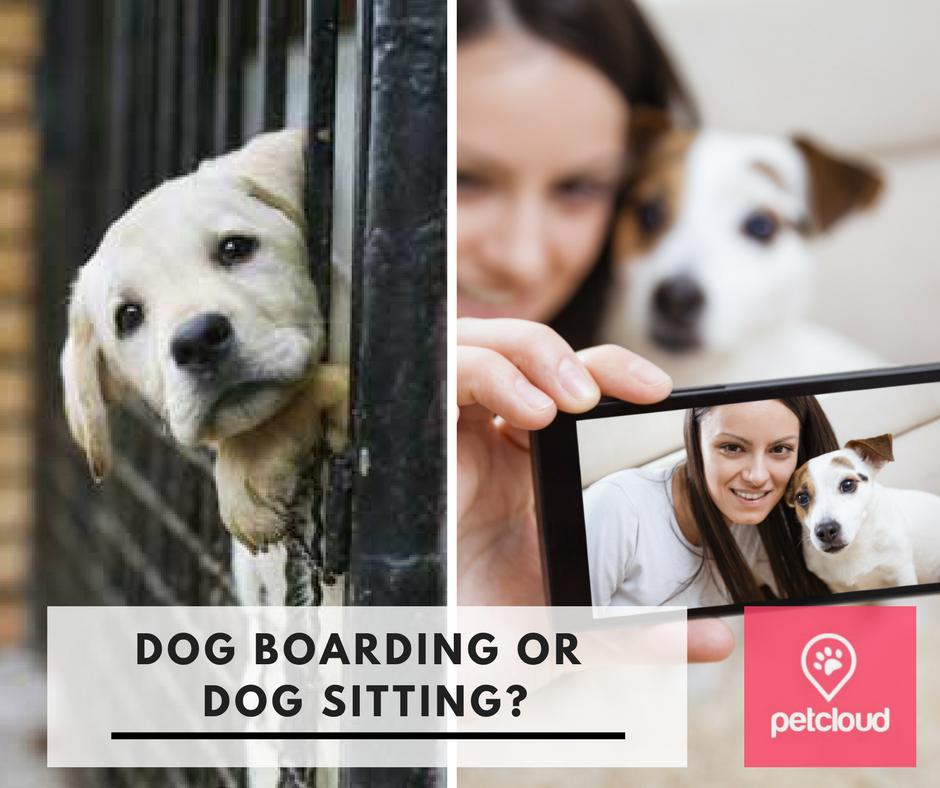 dog boarding, dog kennels, kennels, dog sitters, Brisbane, Sydney, Melbourne, boarding cost, pet sitter cost, boarding, kennels