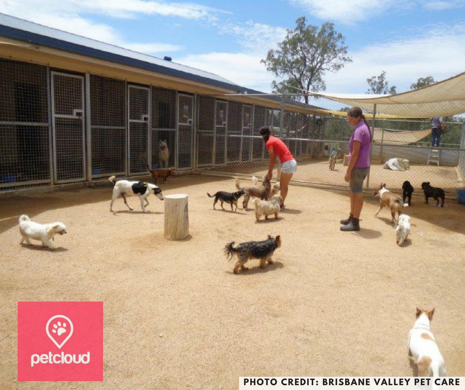 dog boarding, dog kennels, boarding, kennels, brisbane, sydney, melbourne, dog cages