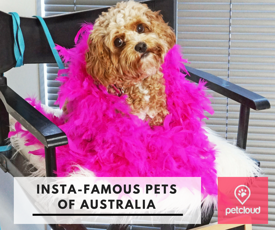insta-famous, pets, dogs of instagram, cats of instagram, petcloud, gold coast pet expo, instagram