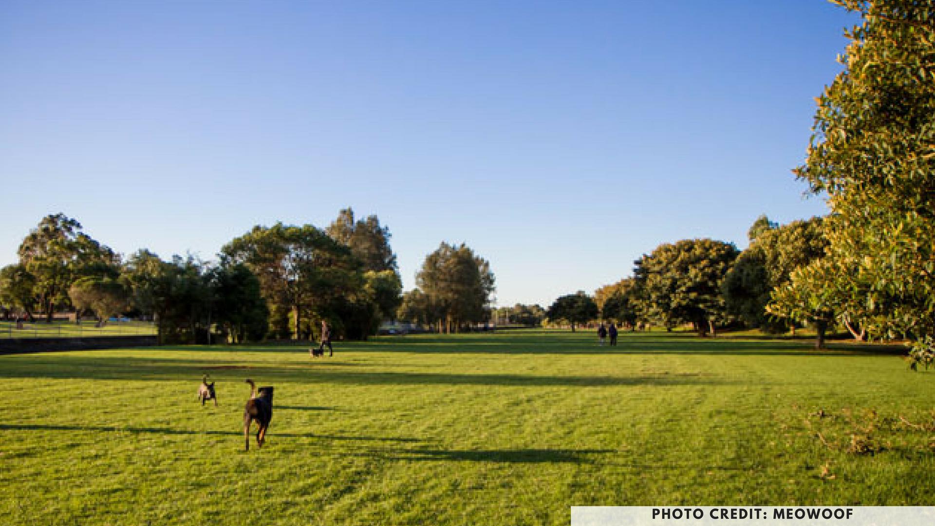 Hawthorne Canal Reserve, Sydney, dog parks, dog friendly park, leichhardt, petcloud