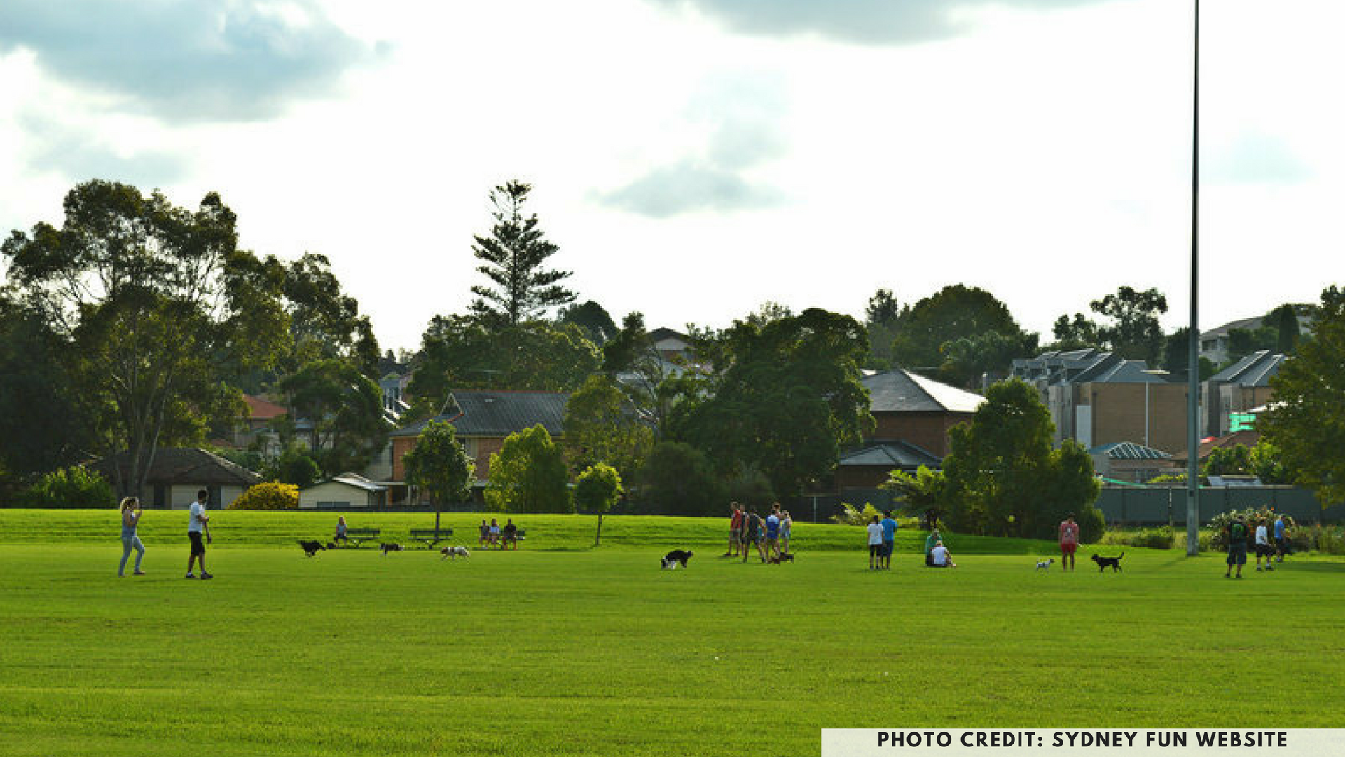 Dan Mahoney Reserve, North Parramatta,Sydney, dog friendly parks, dog parks, petcloud