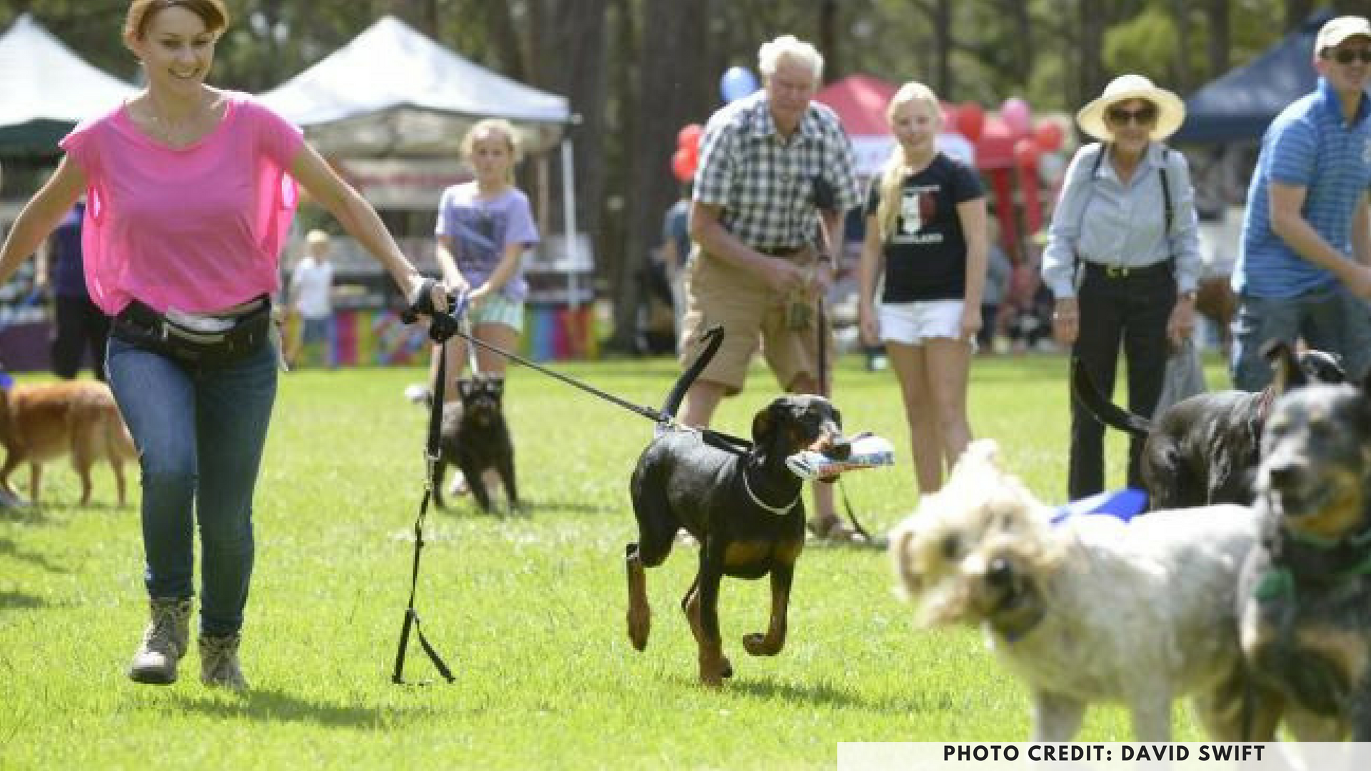 St Ives Showground, St Ives, Sydney, dog friendly parks, dog parks, petcloud