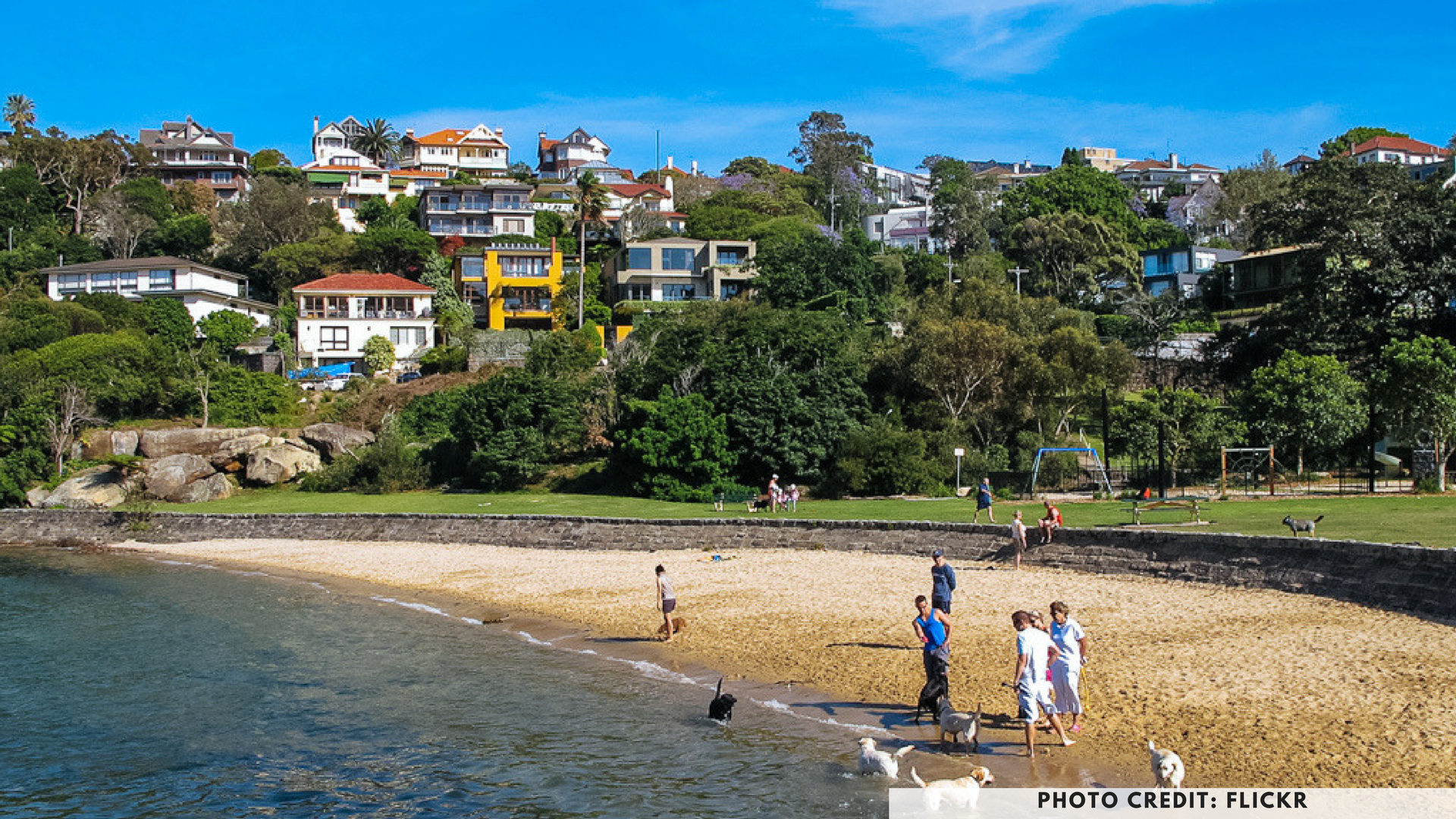 Sirius Cove, Mosman, Sydney, dog friendly parks, dog parks, petcloud