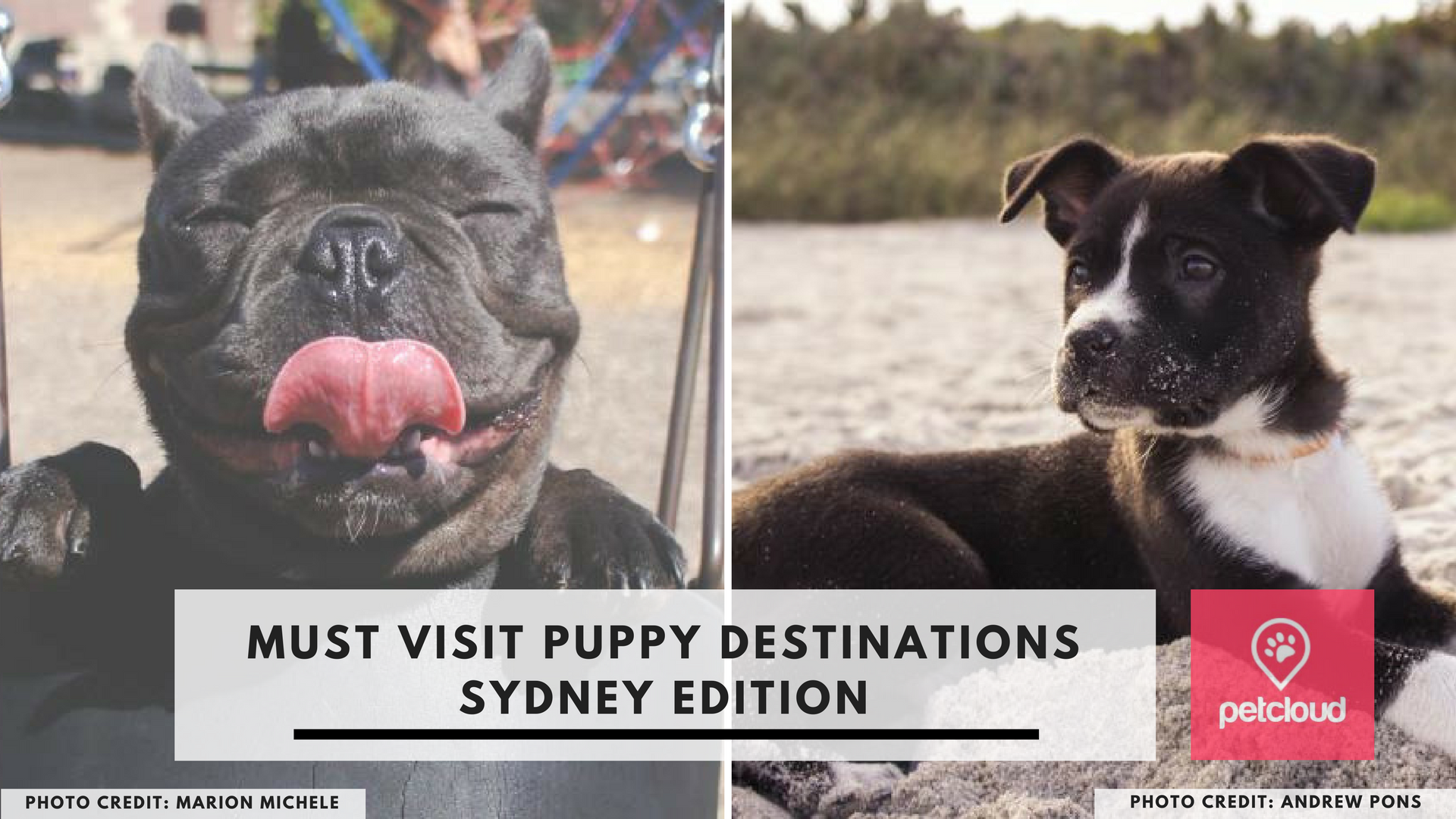 Must visit puppy destinations, Sydney, dog friendly parks, dog parks, dog friendly beaches, dog beaches, dog pubs, dog friendly pubs, dog cafes, dog friendly cafes, dog lovers, Petcloud blog article image