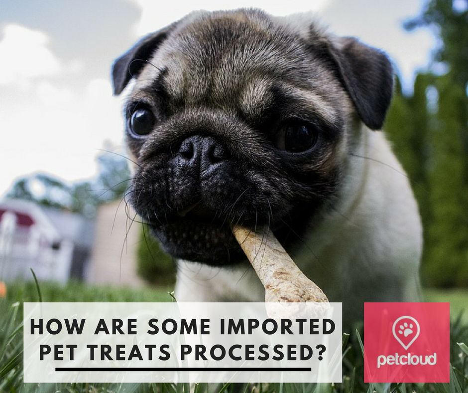 How pet treats are processed, petcloud, dog park, pug, dog treats, pet treat, cat treat, pet food safety awareness, irradiation blog article image