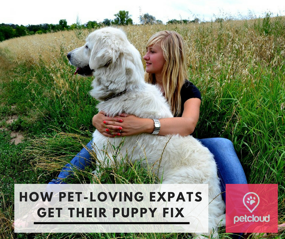 pet lovers, expats, leaving a pet behind, pet sitting, dog lover, dog walking, expats in Australia, puppy fix, puppy cuddles, PetCloud, community spirit, relocating without your pet blog article image