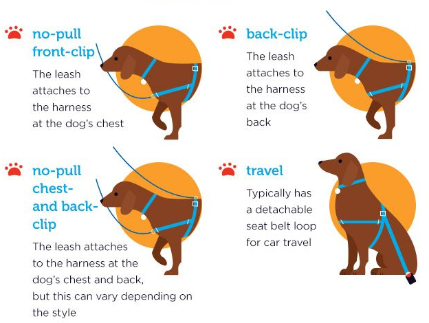 Types Of Dog Harnesses