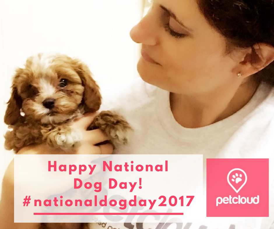National Dog Day Australia, Paws for Thought, NexGard, Guide Dogs of Austalia blog article image