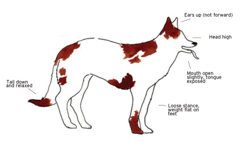 Dog Behaviour Basic, How to read Dog Behaviour, Relaxed, Approachable, Dog Lover, Dog Trainer