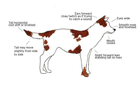 Dog Behaviour Basic, How to read Dog Behaviour, Alert, Checking things out, Dog Lover, Dog Trainer