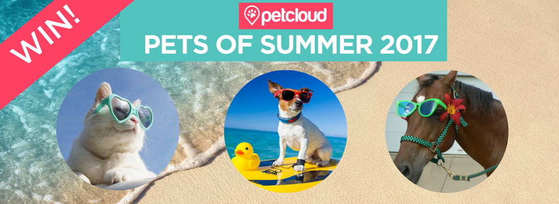PetCloud's The Pets of Summer Competition 2017, Pet Sitting, Pet Carer, Competition, Pet Pamper Packs
