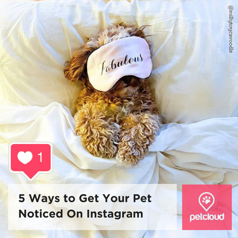 Ways to Get Your Pet Noticed On Instagram in Australia blog article image