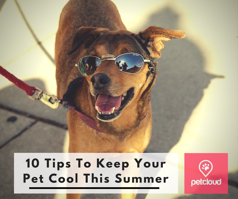 Keeping Your Pet Cool This Summer blog article image