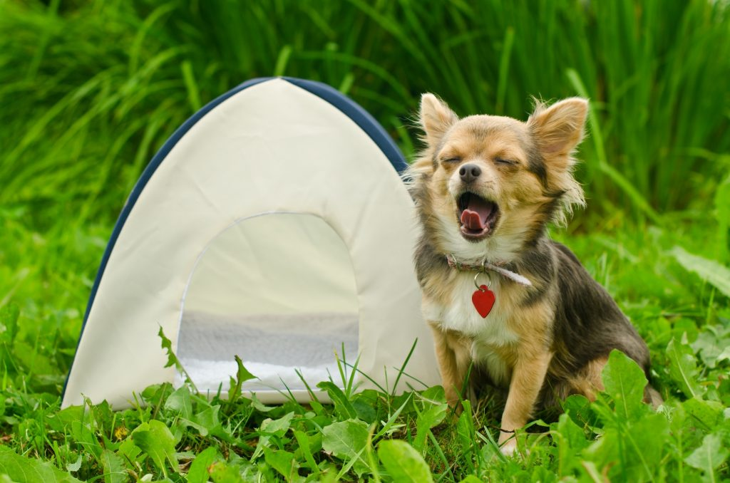 Camping with Dogs blog article image