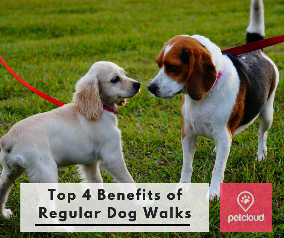 Top 4 benefits of regular dog walks, dog walking, dog walkers, trusted and reliable dog walkers, PetCloud, Brisbane, Sydney, Melbourne, dog parks, dog beaches, dog training, Justin Jordan,