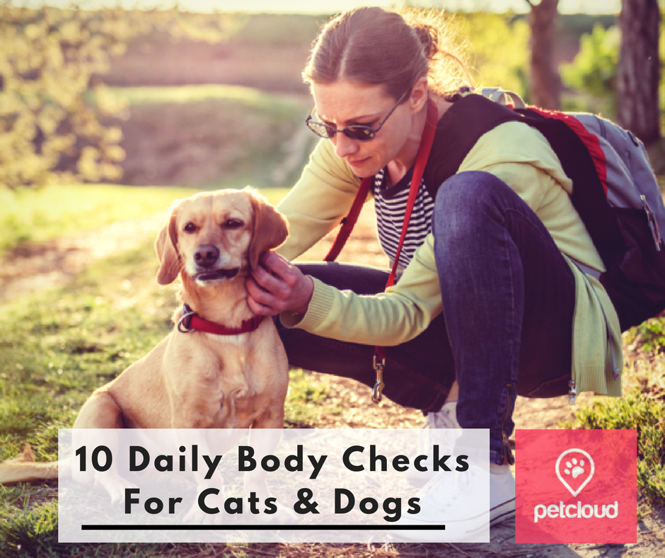 10 Daily Body Checks you need to do on Pets, Pet Sitting, Pet Owner, Dog owner, Cat Owner, pet safety tips blog article image