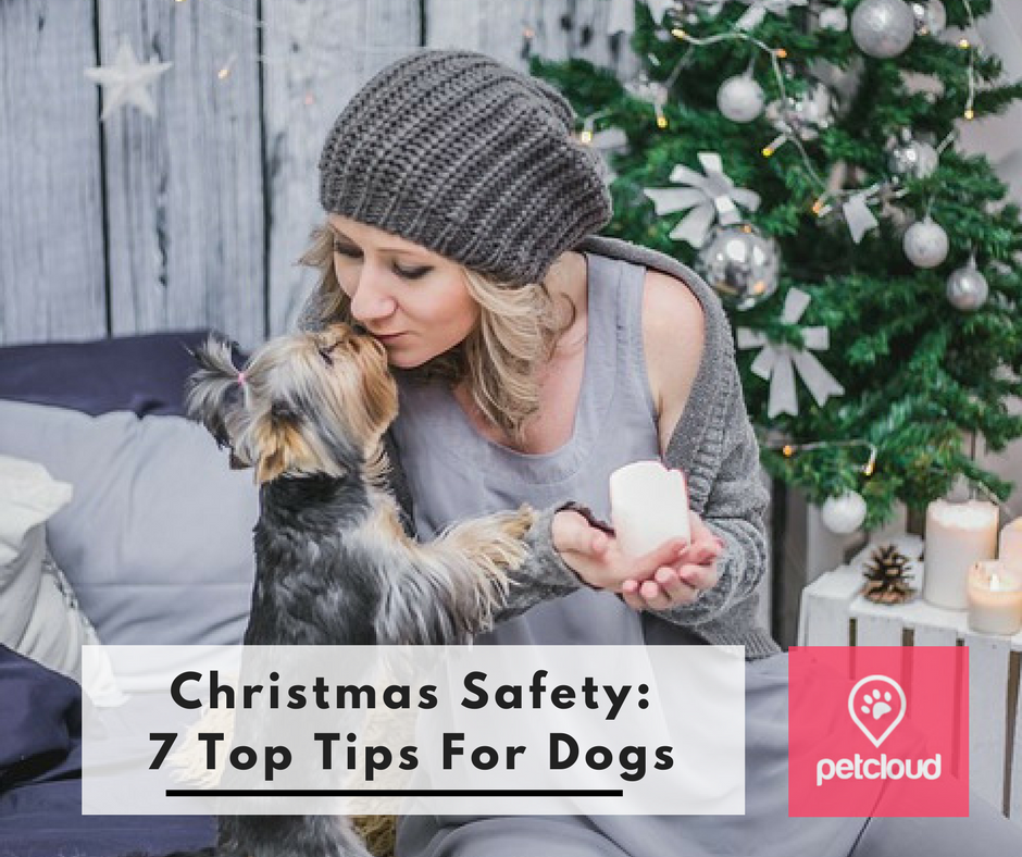 Christmas, Safety Tips for Dogs, Christmas Trees, Pet Minding Safety tips, puppies, Christmas Decorations, Tinsel, Human Food Toxic For Dogs, Pancreatitis, Noise Anxiety, Dr Glen Richards blog article image