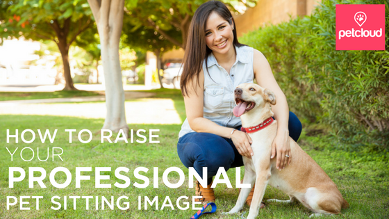 How to make a good impression at a meet and greet for pet sitting clients blog article image