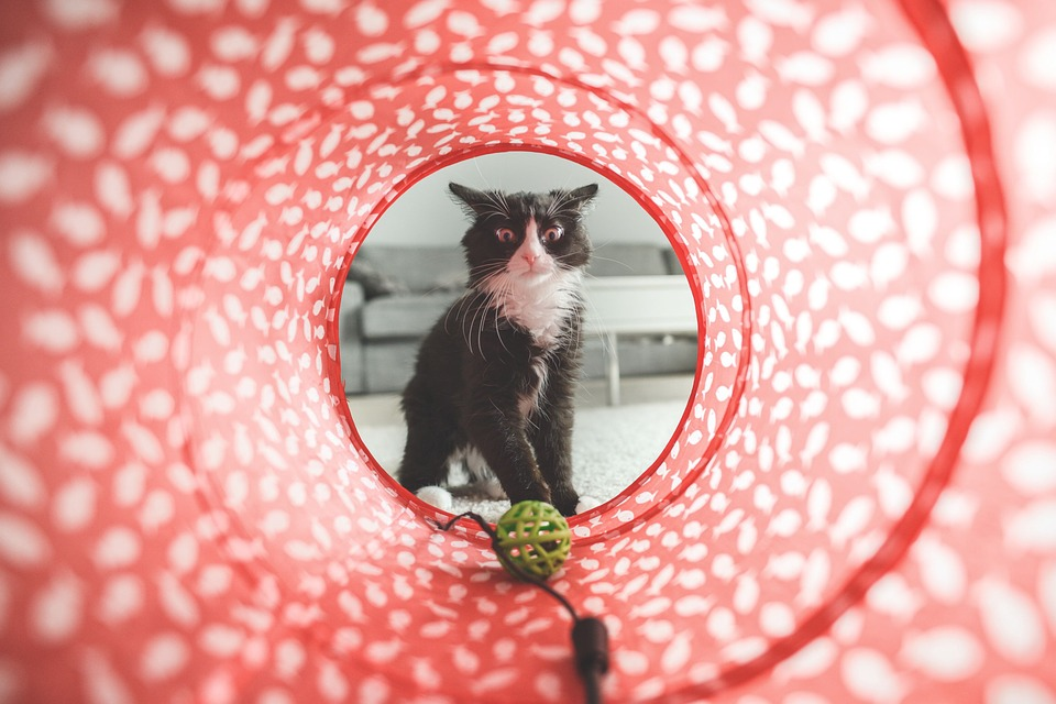 play time, cat toys, cat tunnel, kittens, how to care for kittens, pet sitting, cat sitting, cat minding,
