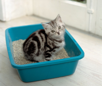 Kitty litter, PetCloud, cat, kitten, How to care for your kitten, Pet sitting, cat sitting