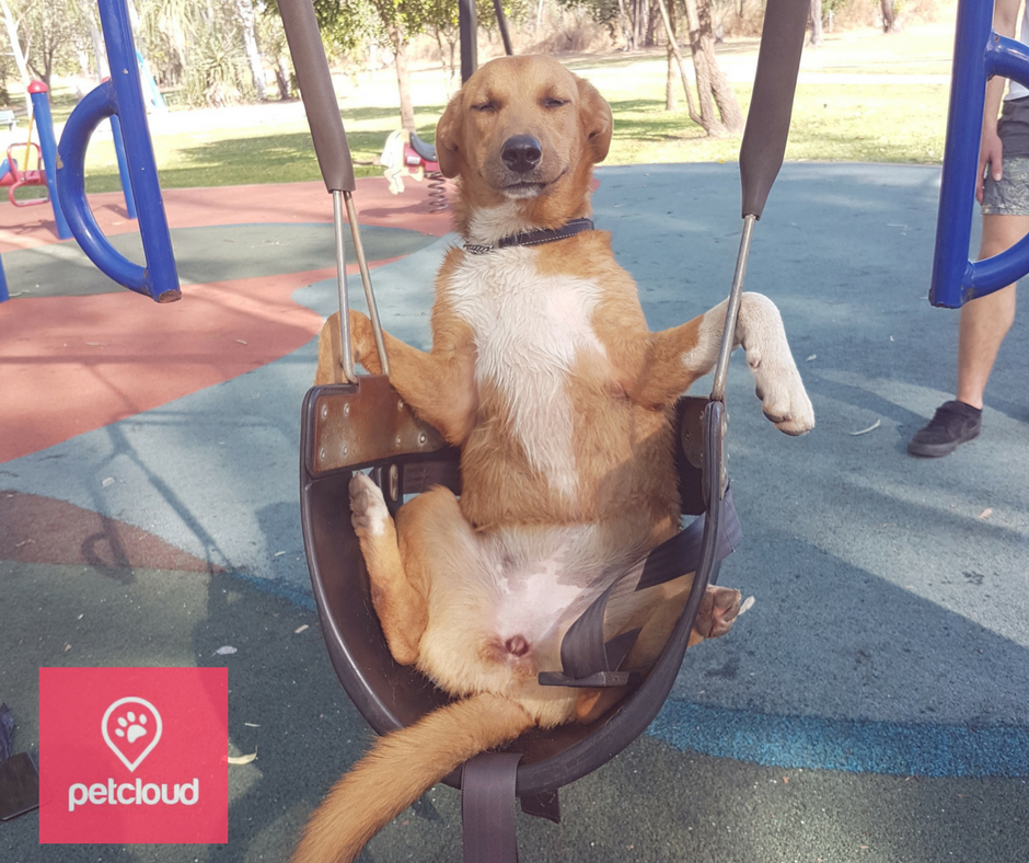 petcloud, pets of summer competition, mix breed, Australia, photo competition, heat stroke, heat stress, sun safety,