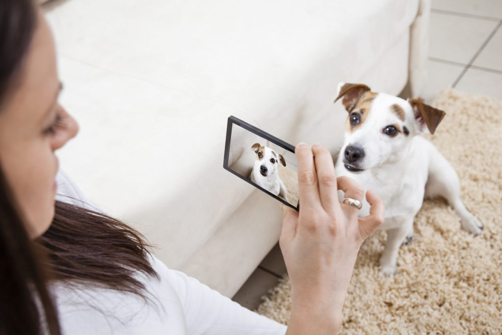 Pet Sitter taking Daily Photo updates with a smart phone
