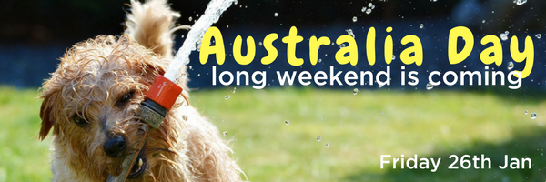 Australia Day, January, Summer, BBQ, Pet Safety, PetCloud, Pet Care, pet sitting, dog boading, dog sitting, water play, dog, puppy, Celebrations, Pet Safety tips, entertaining with pets blog article image